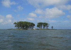 zelenie ostrova